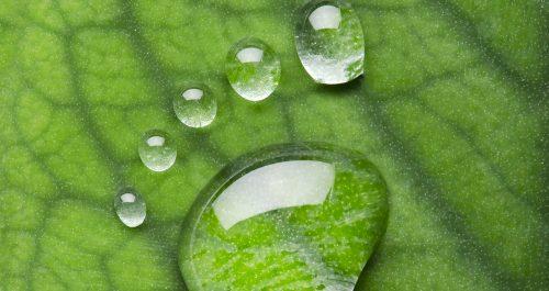 Jak redukować ślad węglowy?